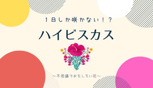 【1日花】ハイビスカスの意外な生態解説!【暑さに弱い?】