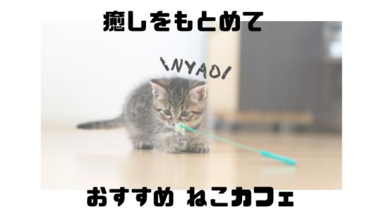 熊本で人気のネコカフェで癒されよう!【おすすめのお店5選】【中央区】【東区】
